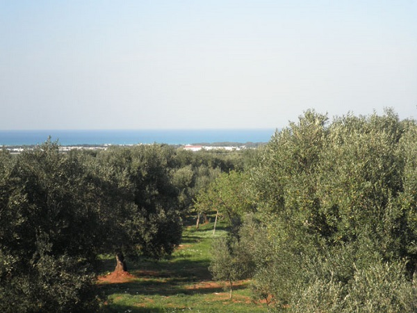 Villa habitable avec oliviers et vue sur la mer à vendre près de Ostuni dans les Pouilles