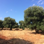 lots of building land in Puglia