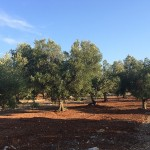 possible construction of sea view land for sale in Carovigno