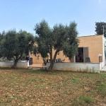 Neubau mit Olivenbäumen zum Verkauf in der Nähe von San Vito Norman