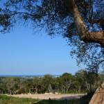 Terreno edificabile con vista mare e alberi di ulivo in vendita a Carovigno in Puglia